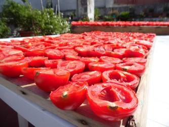 Secando tomates